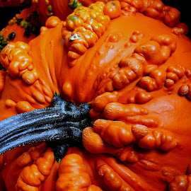 Warty pumpkins are my favorites though! by Liz Hahn - Nature Up Close Gardens & Produce
