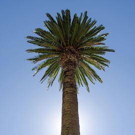 Auckland Palm by Russ Hanson-Coles - City,  Street & Park  City Parks