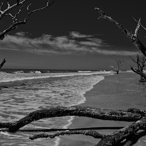 Botany Bay - Boneyard Beach 1 by Jonathan Wheeler - Black & White Landscapes ( sc parks, deadwood, edisto island, beach, boneyard )