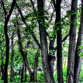 Reach for the sky by Alin Militaru - City,  Street & Park  City Parks ( park, nature, trees, road, walk, city,  )