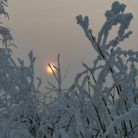 Frost by Glyn Thomas Jones - Landscapes Prairies, Meadows & Fields ( winter, cold, frosting, frost, winter sun, freezing, frozen, frosty, frosted )