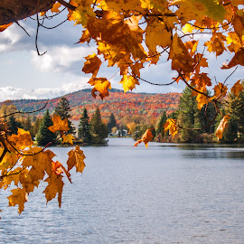 New England in the Fall by Sheldon Anderson - Landscapes Waterscapes ( water, orange, red, church, fall colors, new england, fall, scenic )