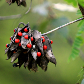 For the birds... by Elfie Back - Nature Up Close Leaves & Grasses ( bird berries, red berries, fall colors, seeds )