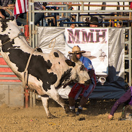 Get Up by Jim Freeman - Sports & Fitness Rodeo/Bull Riding ( cowboy, sports, action, rodeo, bull )