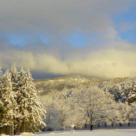 AFTER THE SNOW  by Ann Shehan - Landscapes Weather