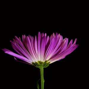 purple flower 11.jpg