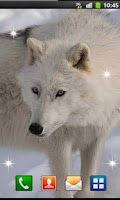 Screenshot of Wolf Best HD live wallpaper