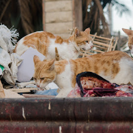 Garbage Heaven by Dee Tee - News & Events Health ( cats, waste, life, rubbish, gingers, health, garbage, strays,  )
