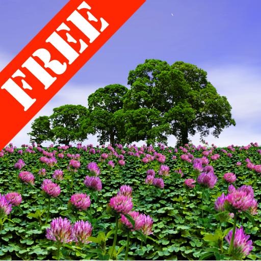 Clover Field Free