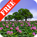 Clover Field Free icon
