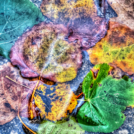 Annoying autumn rains by Oliver Švob - Instagram & Mobile Android ( sony, water, sony xperia, instagram, autumn, foliage, leafage, fall, drops, leaves, rain, mobile )