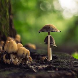 by Zoltán Ferkó - Nature Up Close Mushrooms & Fungi (  )