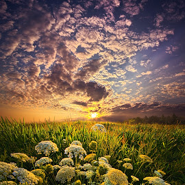 In This Moment We Are Infinite by Phil Koch - Landscapes Prairies, Meadows & Fields ( vertical, photograph, farmland, yellow, leaves, wicounties, love, sky, tree, nature, weather, flower, follow, orange, twilight, agriculture, horizon, portrait, environment, dawn, season, serene, trees, floral, inspirational, natural light, wisconsin, ray, landscape, phil koch, spring, sun, photography, farm, horizons, inspired, clouds, office, park, green, scenic, morning, shadows, farming, wild flowers, field, red, fog, blue, sunset, peace, meadow, crops, landscapephotography, summer, beam, earth, harvest, sunrise, landscapes, mist,  )