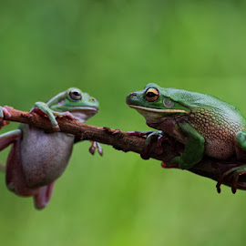 :: Help Me...  :: by Dedy Haryanto - Animals Amphibians