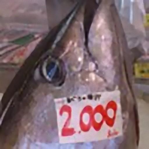 沖縄釣魚図鑑 LOGO-APP點子