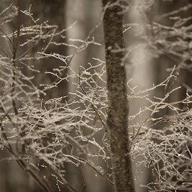 by Peter Armstrong - Landscapes Forests ( black and white, b&w, landscape )