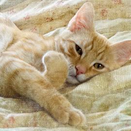 Do not disturb by Vivian Gordon - Animals - Cats Kittens ( kitten, cat, pet, feline, domestic, animal )