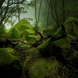 Misty path by Artur Carvalho - Landscapes Forests ( forests, foggy, trees, landscapes, rocks )
