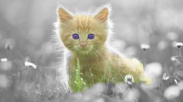 Screenshot of Cat Live Wallpaper