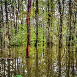 Deep in forest, flood by Oliver Švob - Instagram & Mobile Android ( sony, water, sony xperia, instagram, nature, wood, tree, flood, forest, mobile,  )