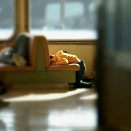 sleepers by Stephen Baker - Babies & Children Child Portraits ( ferry, candid, window sunshine, sleep, relax, tranquil, relaxing, tranquility )