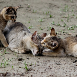 Motherly Love  by Bikash Ranjan Kalita - Animals - Cats Playing