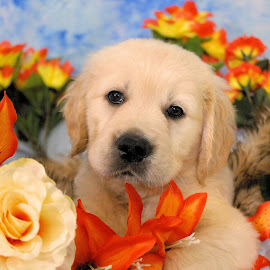 Puppy Luv by Julie Blight - Animals - Dogs Puppies (  )