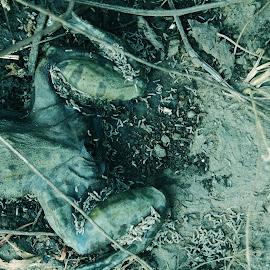 Maggots by Prerna Gawde - Animals Amphibians