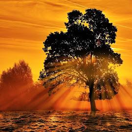 Dawn In The Bog. by Leslie Hanthorne - Landscapes Sunsets & Sunrises