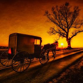 Witness by Linda Karlin - Landscapes Travel ( tree, sunset, wildlife, travel, landscape,  )