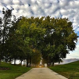 Sunnyvale by Somnath Kundu - Landscapes Forests ( park, california, landscape, bayland, sunnyvale )