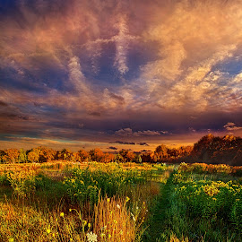 One Step at a Time by Phil Koch - Landscapes Prairies, Meadows & Fields ( wisconsin, ray, fine art, travel, landscape, sun, love, sky, tree, nature, autumn, ice, snow, trail, path, bluesky, horizons, light, flower, clouds, park, twilight, horizon, back light, morning, shadows, wild flowers, field, dawn, winter, color, sunset, outdoors, fall, trees, beam, sunrise, hike, mist )