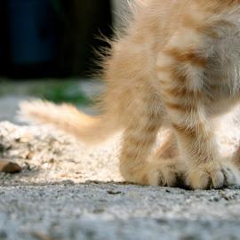 Baby Steps by Joana Domingues - Animals - Cats Kittens ( cat, kitten, yellow cat, baby animals, steps, cats, sweet, floor, nature, baby feet, pets, baby, kittens, feline, felines )