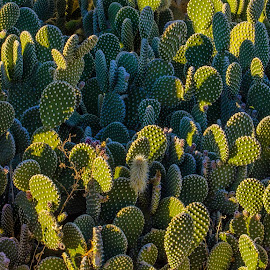 Pinch of Green by Leslie Nu - Landscapes Deserts ( desert, cacti, cactus )