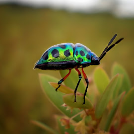 Colorful... by Michael Winoto - Novices Only Macro