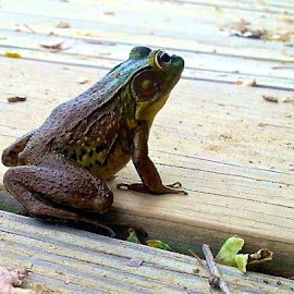 Frog with iPhone by Tyrell Heaton - Instagram & Mobile iPhone ( frog, iphone )
