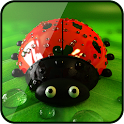 Ladybug Live Wallpaper Free icon