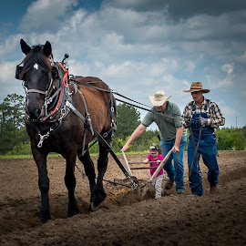 Three Generations by Sheldon Anderson - News & Events Technology ( animals, plowing, mule, 2014, horse, implements, tilling, farming )