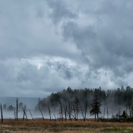 Yellowstone by Taylor Sanderson - Landscapes Prairies, Meadows & Fields ( clouds, yellowstone national park, meadow, steam )