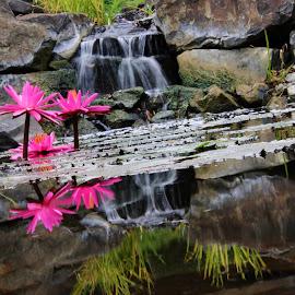 Pink by Donna  Isaacs - Novices Only Flowers & Plants ( #flowers #flower #tagsforlikes #petal #petals #nature #beautiful #love #pretty #plants #blossom #sopretty #spring #summer #flowerstagram #flowersofinstagram #flowerstyles_gf #flowerslovers #flowerporn #botanical #floral #florals #insta_pick_blossom #flowermagic #instablooms #bloom #blooms #botanical #floweroftheday )