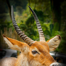 2 Horns by Danny Zu - Animals Other