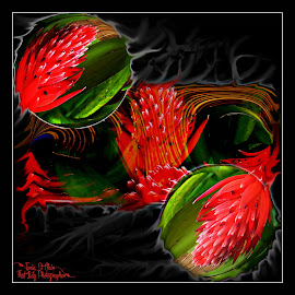 Burning Brom by Tania St Clair - Digital Art Things ( plant, red, digital art, bromeliad, flowers, photography )