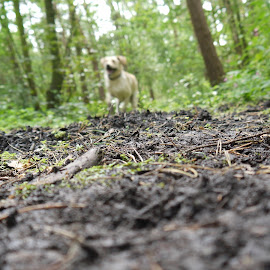by Andrew Benn - Animals - Dogs Running