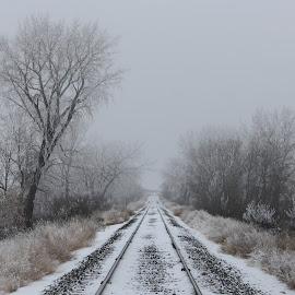 Off Track by Laura Gardner - Landscapes Travel ( north dakota, winter, cold, fog, railroad, nd, snow, white, frost, us, travel, landscape )