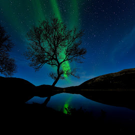 Tree and northern lights by Marius Birkeland - Nature Up Close Trees & Bushes ( sky, blue sky, tree, blue, northern lights, aurora borealis, aurora, , Earth, Light, Landscapes, Views, renewal, green, trees, forests, nature, natural, scenic, relaxing, meditation, the mood factory, mood, emotions, jade, revive, inspirational, earthly, serenity, factory, charity, autism, light, awareness, lighting, bulbs, LIUB, april 2nd )