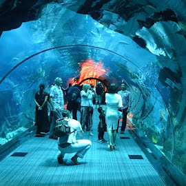 Tunnel in Aquarium by Marcel Cintalan - People Group/Corporate ( dubai, aquarium, photographer, people, tunnel,  )