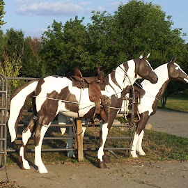 Horse Statues by Cindy Cooper Houser - Buildings & Architecture Statues & Monuments ( statue, horses, still life, statues, horse, artistic, horse statue )