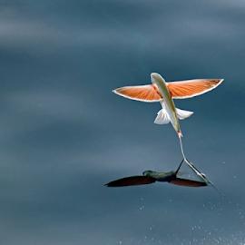 by Aleksandar Kordic - Animals Fish