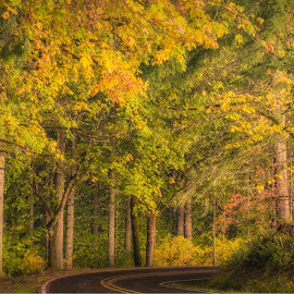 Late Autumn Afternoon by Kevin Brown - Landscapes Forests ( color, afternoon, autumn, foliage, fall, yellow, glow, golden )