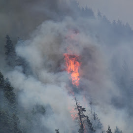 Plumes of Smoke by Kansas Allen - News & Events Disasters ( disaster, flames, canada, lytton, trees, forestry, forest, bc, smoke, fire )